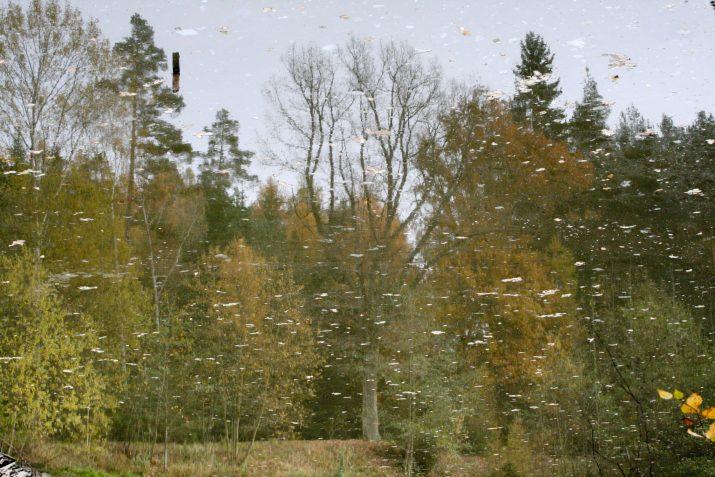 Les pod hladinou