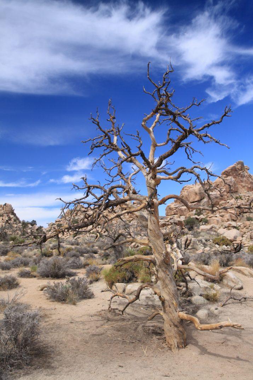Samotář - Joshua Tree National Park