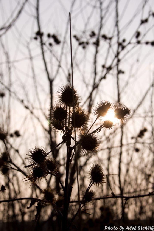 Kotlačky vy svytu zapadajícího slunce