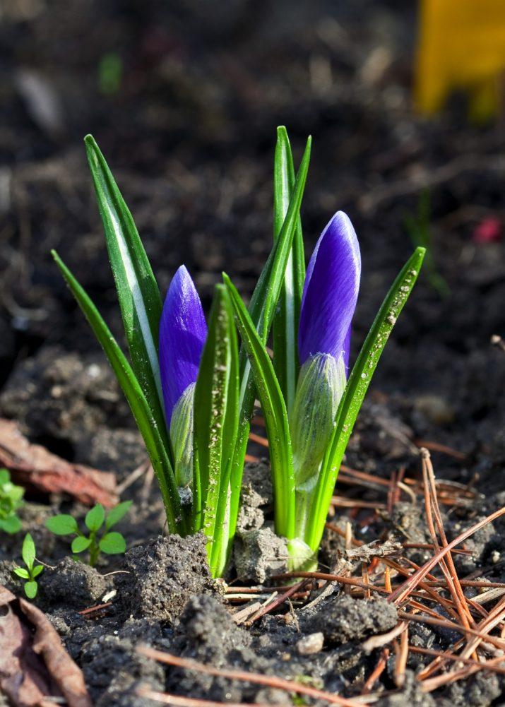 Pozdrav jara