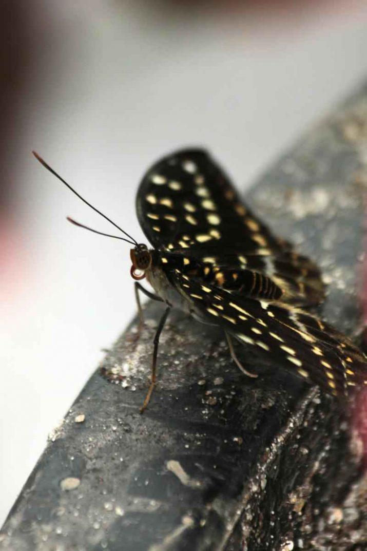 Motýlí I