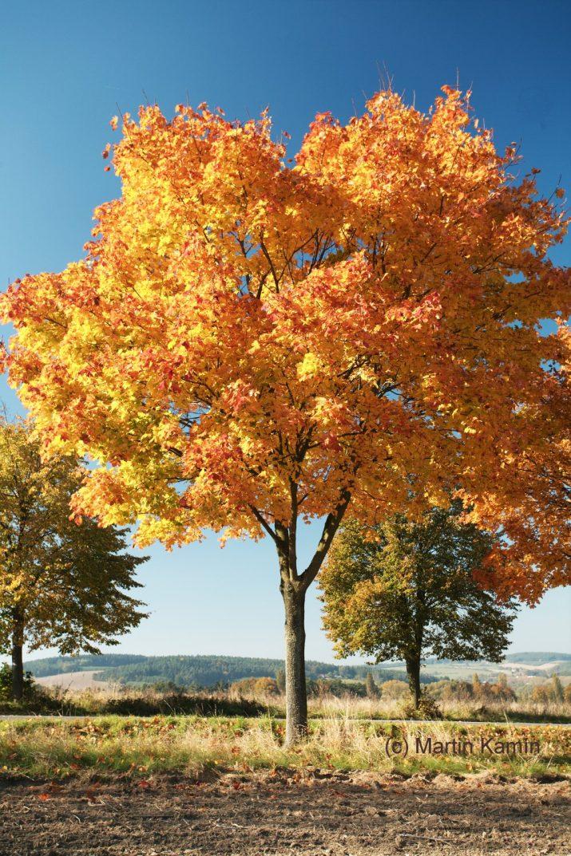 Jihočeský podzim