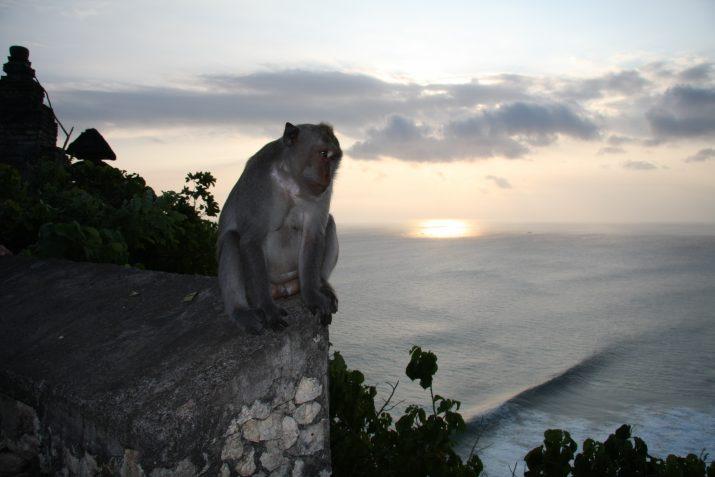 Opice v ráji