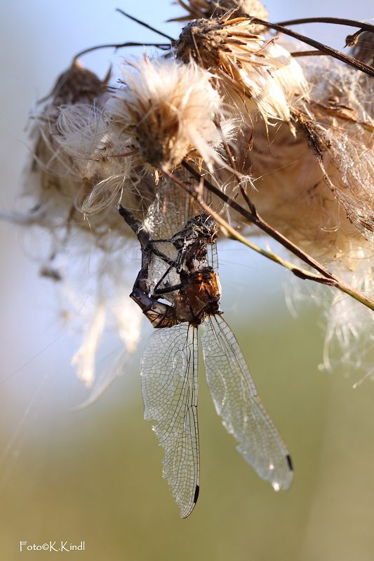 Osud jedné vážky