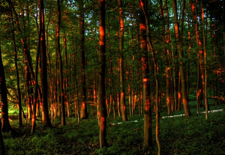 zářící les