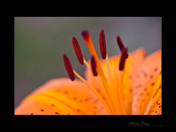 Pylová
