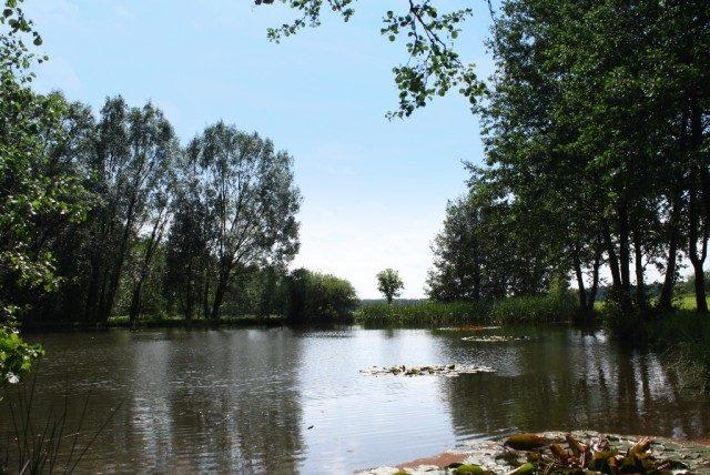 Rybníček na kraji lesa
