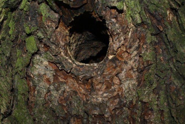 Bydlení ve stromě