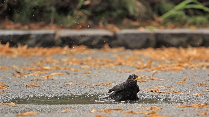 Birds Bath